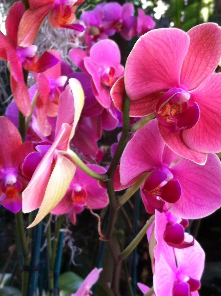 pinkorchids14